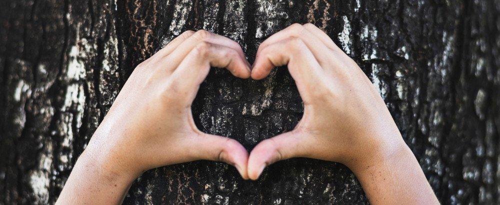 Zwei Hände formen ein Herz vor der Rinde eines Baums